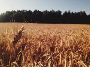 La nécessité d'une agriculture plus durable